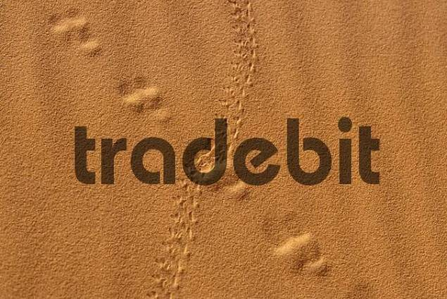 Traces in the sand