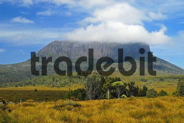 view from Pine Forest Moor on Overland Track in Cradle Mountain Lake St Clair Nationalpark Tasmania Australia