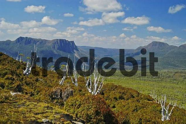 view of Mt Pelion West from Overland Track in Cradle Mountain Lake St Clair Nationalpark Tasmania Australia