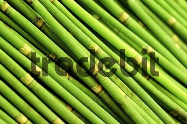 Green bamboo sticks download nature