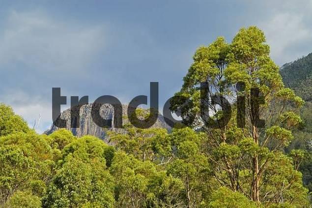 landscape near Kia Ora Hut at Overland Track in Cradle Mountain Lake St Clair Nationalpark Tasmania Australia