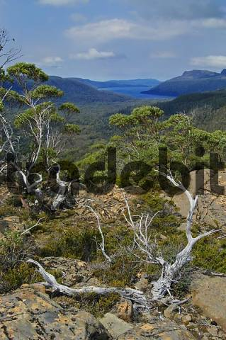 The Labyrinth near Pine Valley on Overland Track in Cradle Mountain Lake St Clair Nationalpark Tasmania Australia