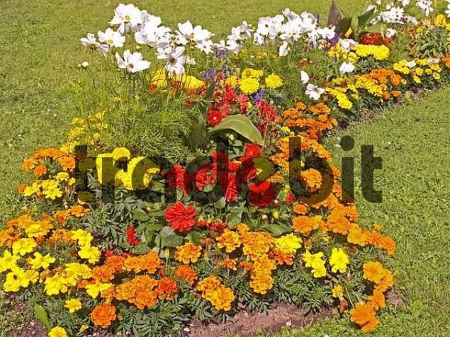 Germany Bavaria Upper Bavaria Linderhof Park grounds Flowers bed with yellow red and white Flowers green Grass