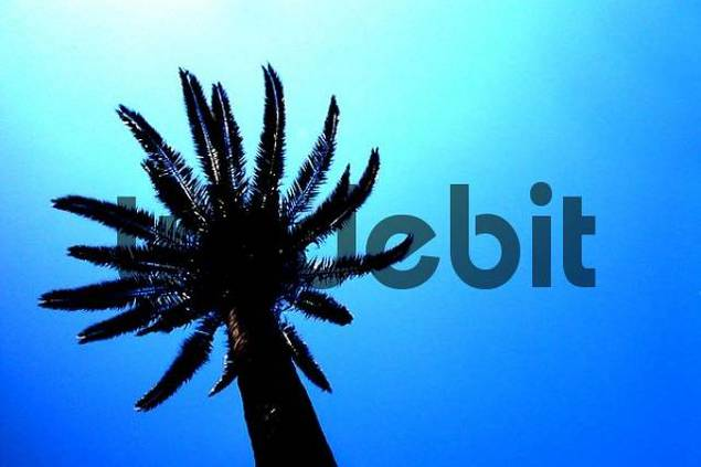 Spain , Barcelona , palm with blue sky