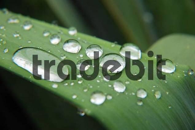 waterperls on a leaf