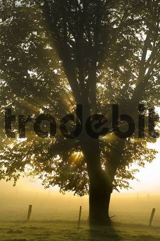 morning mist in the late autumn near Oberbuchen district of Bad Toelz-Wolfratshausen Upper Bavaria Germany