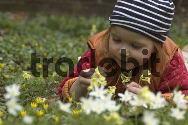 child in spring is happy over the first flowers
