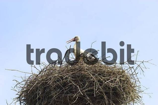 stork - Slovenia