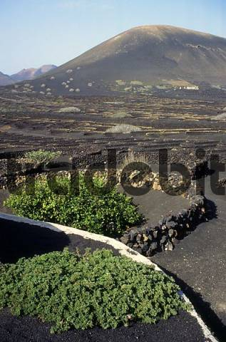 La Geria, Lanzarote, wine-growing areal, the wine-growing is in hollows from lava
