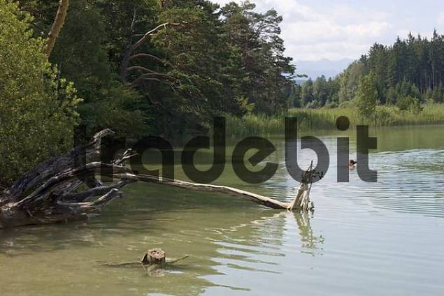 Ostersee lake Upper Bavaria Germany