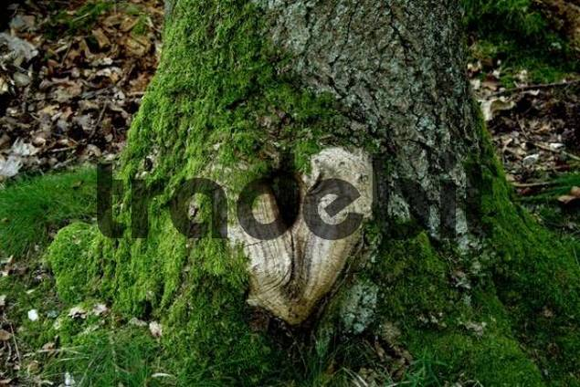 heart on oak taunus hessen germany download pictures graphics. Black Bedroom Furniture Sets. Home Design Ideas