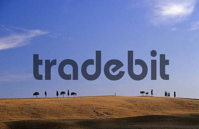 Lonely clump of trees in Tuscany at evening light, Italy
