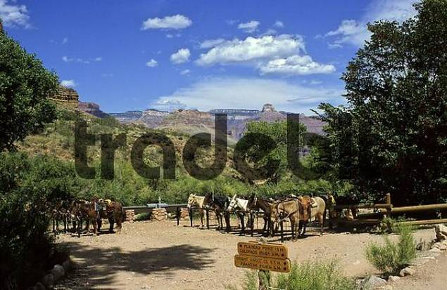 Watering station for horses and mule at Bright Angel Trail, Grand Canyon, Arizona, USA
