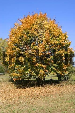 Fall autumn landscape