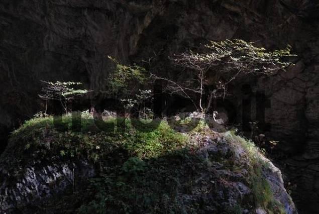 a rock in the dusky Rappenloch canyon - Dornbirn, Vorarlberg, Austria, Europe.