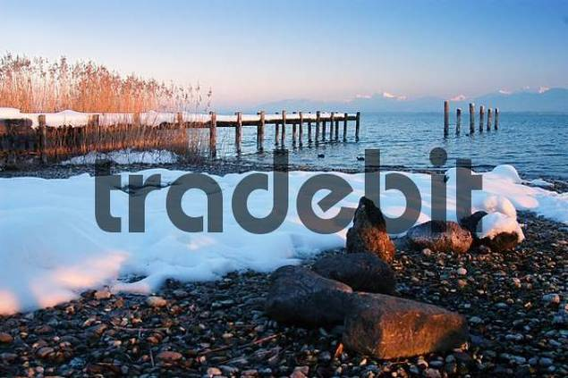 snowy lake Chiemsee beach with landing stage and reed, Bavaria, Germany