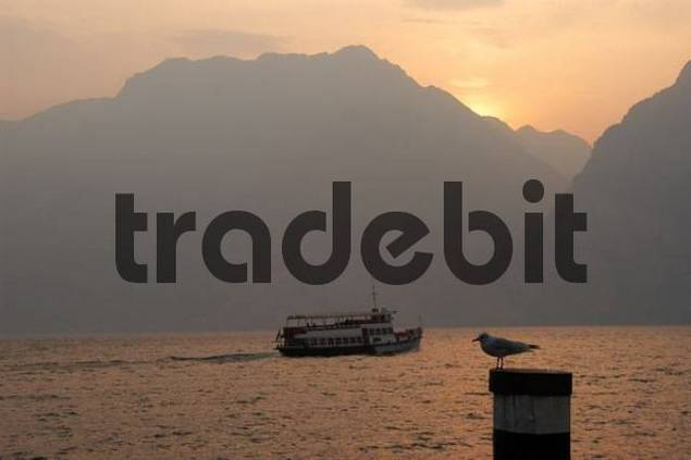 pleasure boat and gull after sunset, Torbole, Lake Garda, Italy