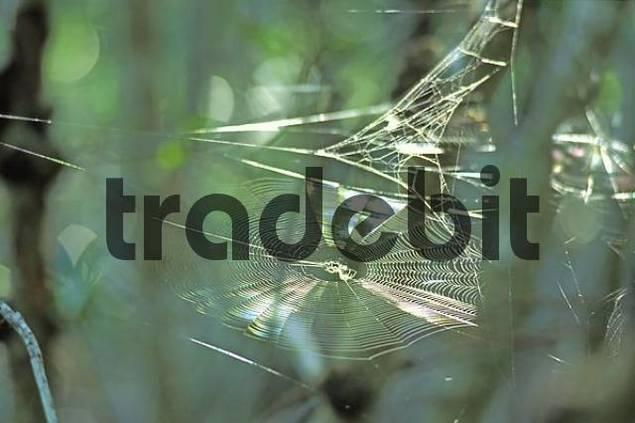 Spider web - Everglades - Florida - USA