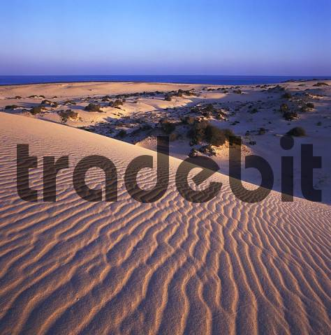Fuerteventura Canary Canary Islands Spain El Jable near Corralejo natural park duins of sand