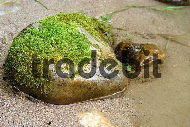 mossy stone in creekbed, Bavaria, Germany