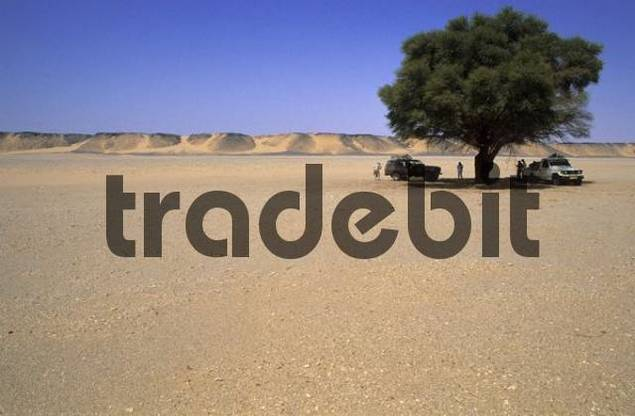 break under a acacia in a desert valley of Jabal Bin Ghanimah, Libya