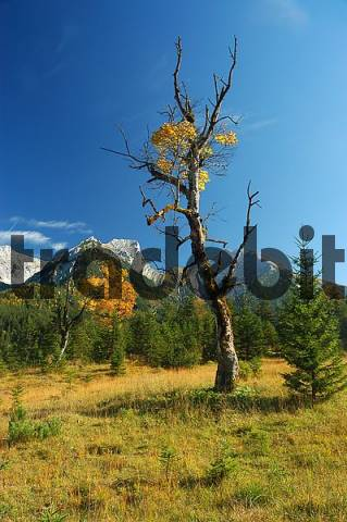 autumn scenery in the Engtal, Karwendel Mountain Range, Tyrol, Austria
