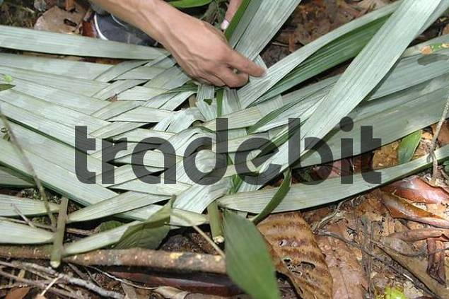 Basket weaving Amazon region Brazil