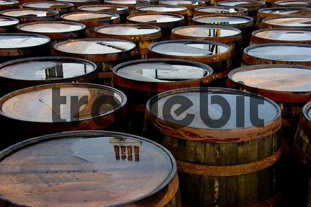 Scotch Whisky ripened in used oak barrels, these ones are waiting for refill in the destilleries yard.