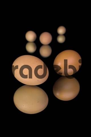 chicken eggs, Studio shots, isolated on black