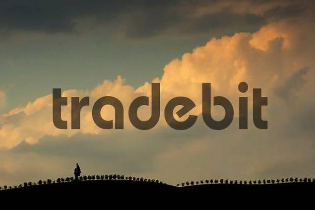tree row under a cloudy sky at sunset, Crete, Tuscany, Italy