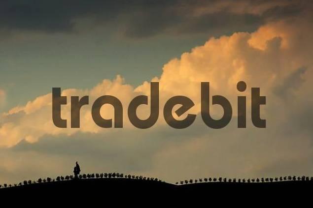 tree row under a cloudy sky at sunset, Crete, Tuscany, Italy
