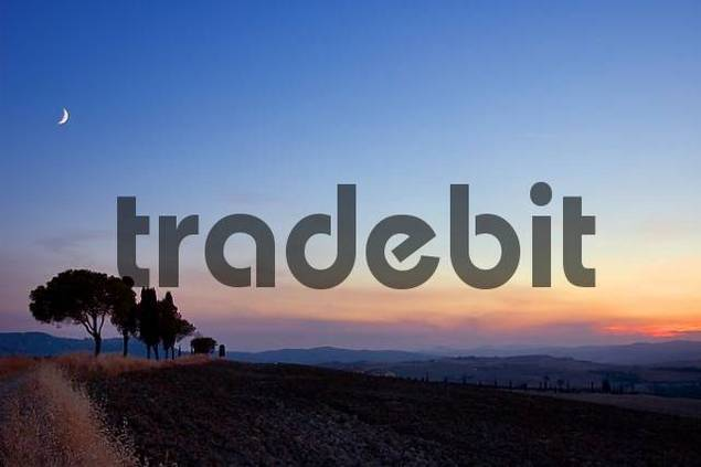 pines and cypresses in the last light of the sun under the moon, Crete, Tuscany, Italy