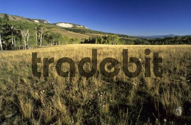 high country on the Wasatch Plateau