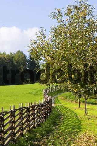 Kirchdorf castle near Grafendorf Steiermark Austria agriculture school plait fence and fruit tree