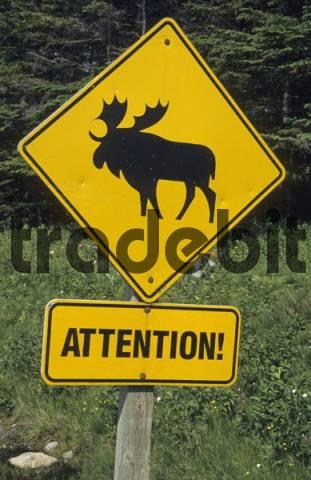 warning sign for moose in Newfoundland, Newfoundland, CAN