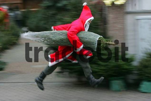DEU, Federal Republic of Germany, Viernheim, Santa Claus running with a Christmas tree
