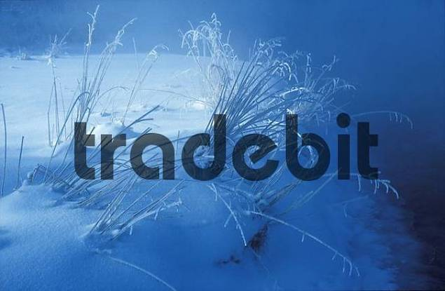winter morning grass with hoarfrost Upper Bavaria Germany