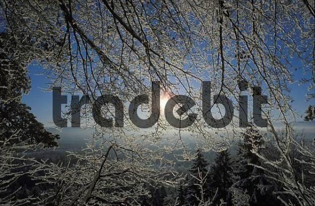 winter morning Pupplinger Au Upper Bavaria Germany