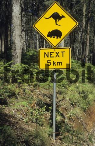 warnings sign for kangaroo and wombat, Victoria, Australia