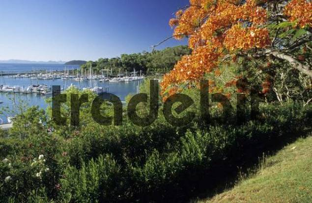 harbour of Hamilton Island, Whitsunday Islands, Great Barrier Reef, Queensland