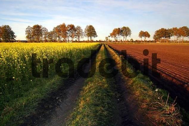 field path along a field in autumn