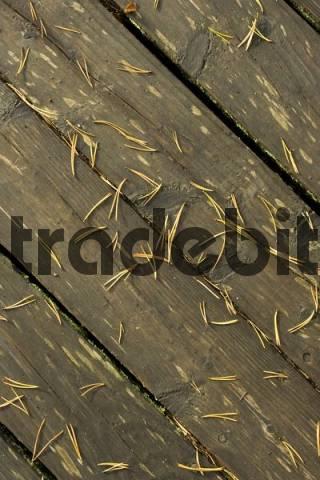 Boardwalk, pine needles, Finland, Europe