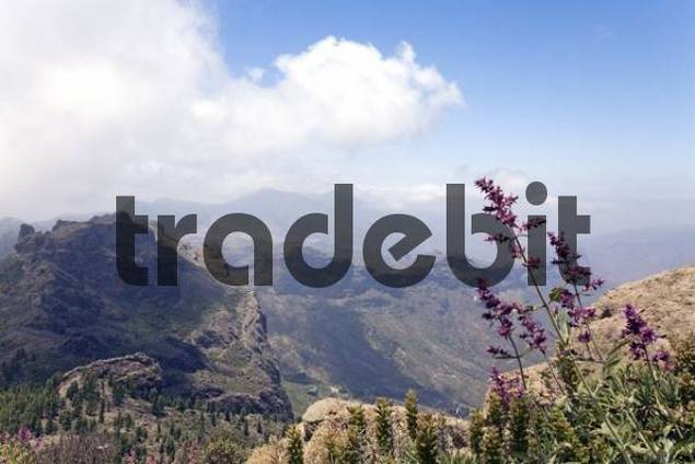 View in the mountains of Gran Canaria, near Roque Nublo, Canary Islands, Spain