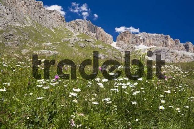 Sella group at Pordoi pass, Dolomite Alps, Dolomites, South Tyrol, ...: https://www.tradebit.com/filedetail.php/2641088v1310141-sella-group...