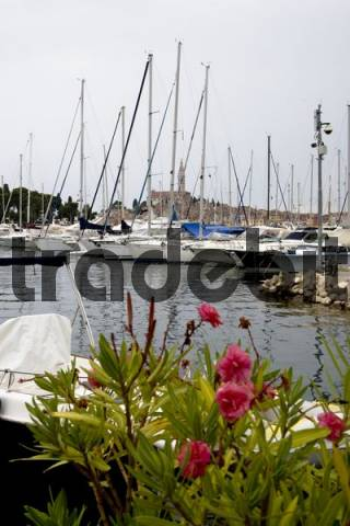 View across the harbour with sailing boats towards the historic town, Rovinj, Istria, Croatia.