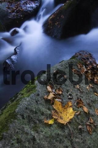 Buchberger Leite, Ringelai, Bayerischer Wald Bavarian Forest, Bavaria, Germany, Europe