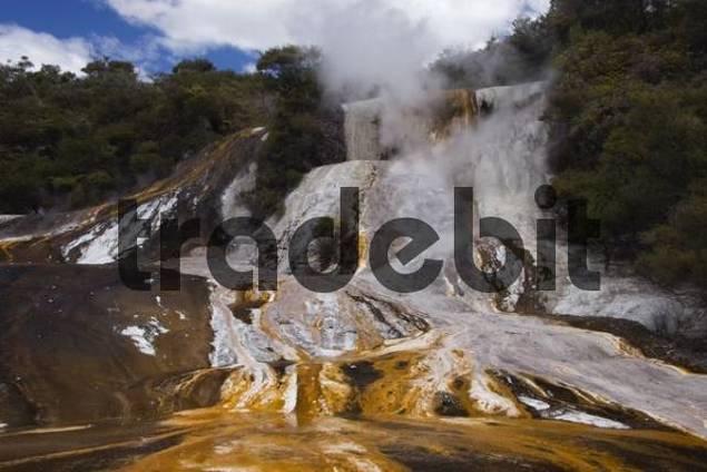 Geyser, Orakai Korako geothermal region near Rotorua, North Island, New Zealand, Oceania