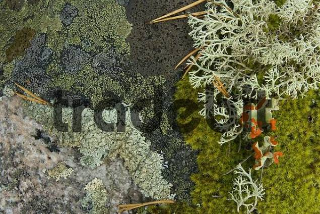 Still life featuring lichens, moss and fungi, Hiidenportii National Park, Finland, Europe