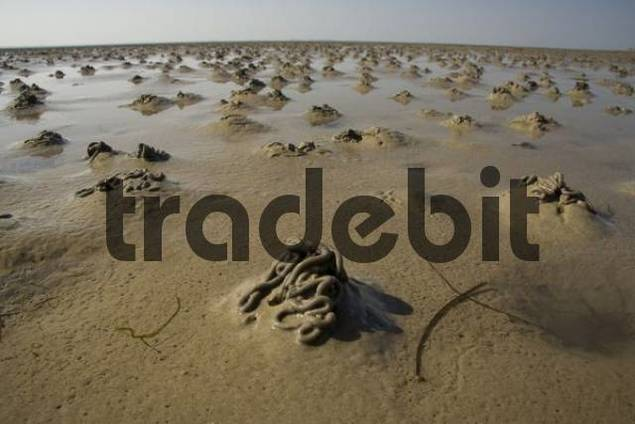 Worms, mudflats