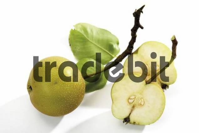 Nashi pears Pyrus pyrifolia with leaves